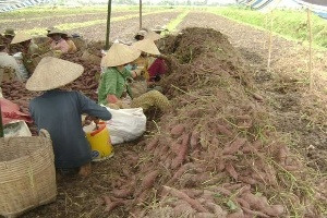 GFSI: chiếc chìa khóa mới để mở rộng thị trường nông sản
