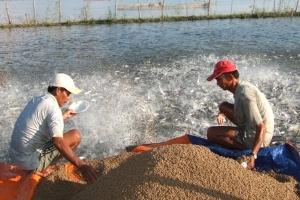 Hơn 64 tỷ đồng xây dựng ngành cá tra bền vững