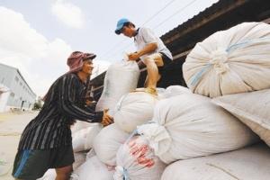 Thương hiệu lúa gạo - phải một thập kỷ nữa?