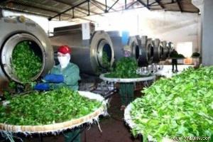 Bài học từ việc nông sản xuất khẩu bị trả về