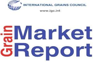 ICG dự báo sản lượng gạo toàn cầu năm 2013/14 đạt 476 triệu tấn