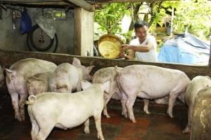 Ngành chăn nuôi: Vẫn loay hoay bài toán cung - cầu