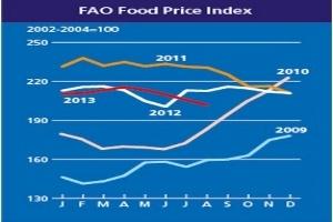 FAO: Giá lương thực toàn cầu giảm 1,9% trong tháng 8