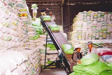 Đôi nét về xuất khẩu gạo sang châu Phi 7 tháng đầu năm