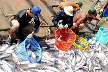 Thị trường xuất khẩu cá tra: Cần tổ chức lại một cách căn cơ