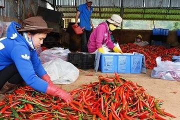 Cơ hội xuất khẩu rau củ quả vào thị trường Indonesia
