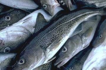 VN nhập nhiều cá hồi, cá tuyết... từ Nhật