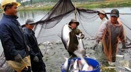 Cần có qui định về nuôi cá tra, ai vi phạm sẽ phạt