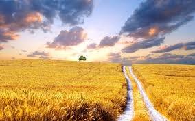 Trung Quốc mua 3 triệu ha đất nông nghiệp của Ukraine