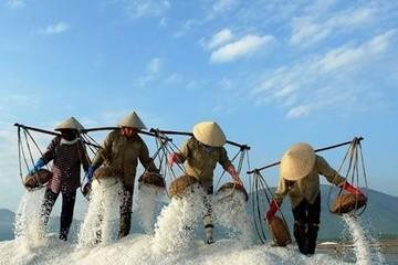 Đã phân giao NK 51.000 tấn muối cho DN