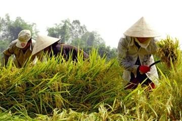 An ninh lương thực không chỉ là lúa, gạo