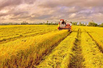 Giao đất cho dân làm cánh đồng mẫu lớn