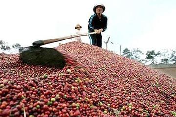 Giá cà phê thấp kỷ lục trong ba năm qua