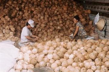Giá dừa khô nguyên liệu tiếp tục tăng giá