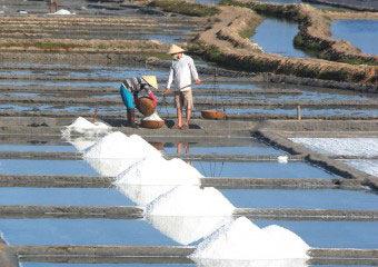 Sản lượng muối 10 tháng ước tăng 28% lên hơn 976.000 tấn