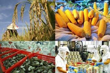 Nông nghiệp Việt Nam: Bóng dáng của nền sản xuất gia công