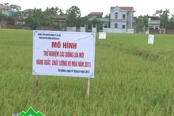 Sản xuất lúa lãi 36 triệu đ/ha