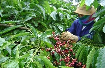 Chiến lược mới cho cà phê Việt Nam