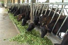 Nước nông nghiệp sao phải nhập nông sản?