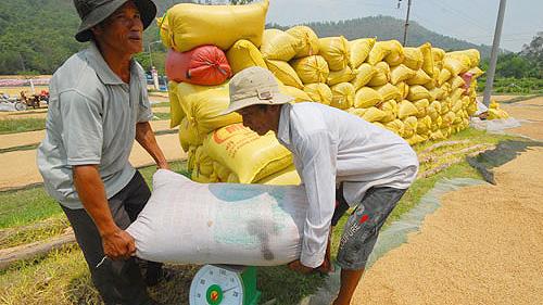 Xuất khẩu gạo Campuchia đạt nhiều bước tiến
