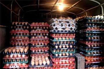 """Chênh lệch giá trứng vì """"khủng hoảng thừa"""""""
