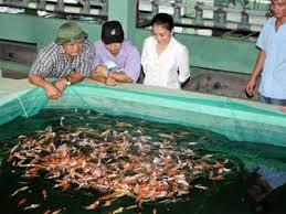 TP.HCM đẩy mạnh xuất khẩu cá cảnh