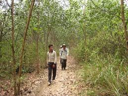 Đầu tư 250 tỉ đồng cho rừng ở Đồng Nai