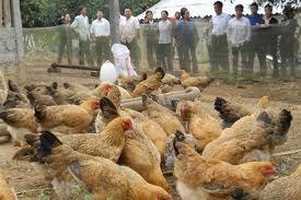 Đưa sản phẩm men vi sinh dùng trong chăn nuôi vào VN