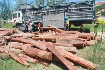 Vận chuyển gỗ quý bị phạt 40 triệu đồng