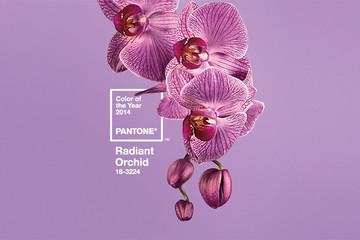 Màu của năm 2014: Tím phong lan