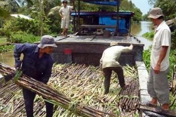 Lối thoát nào cho ngành mía đường Việt Nam?