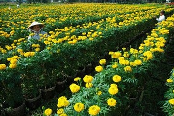 Sôi động thị trường hoa kiểng Đồng Tháp