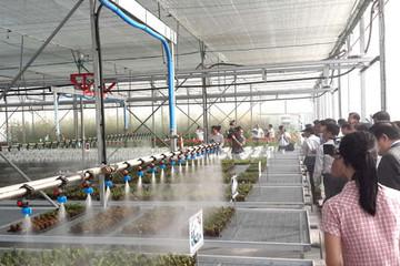 TP.HCM có khu nhà nuôi cấy tế bào thực vật