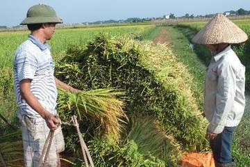 Làn gió mới cho ngành nông nghiệp Việt Nam