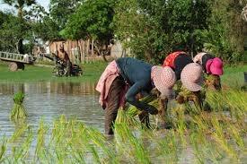 Năm 2013, Campuchia xuất khẩu gần 3 triệu tấn nông sản