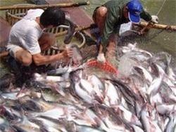 Quy định mức phí quản lý chất lượng nuôi trồng thủy sản