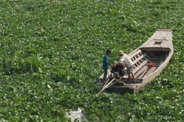 Giao thông trên sông Vàm Cỏ Đông tê liệt vì lục bình