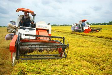 Lúa được mùa, trúng giá, nông dân phấn khởi