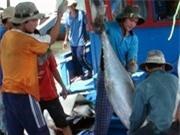 Bình Định: Khai thác cá ngừ đại dương