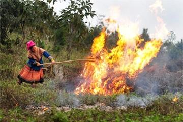 37 tỉnh báo động nguy cơ cháy rừng