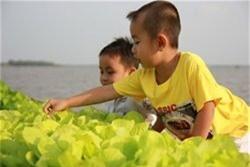 Kinh doanh rau sạch: nước lên thuyền lên