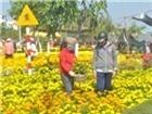TP.HCM: Thu gần 1.600 tỷ đồng từ hoa, cây cảnh dịp tết