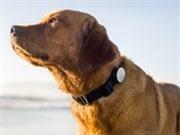 NTT Docomo cung cấp dịch vụ theo dõi cún cưng