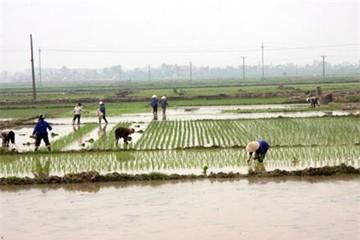 Hà Nội hoàn thành dồn điền, đổi thửa gần 61.400ha