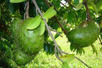Tiền Giang: Xác định 7 loại trái cây chủ lực để phát triển