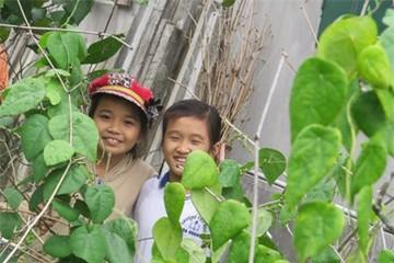 Làm sâm nam ở Phú Yên: Nghề lạ mà sung túc