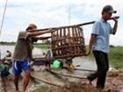 Việt Nam yêu cầu Mỹ không làm khó cá basa