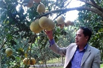 Liên kết sản xuất cây ăn quả