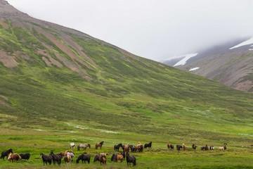 Ngắm cảnh hoang sơ và hùng vĩ của xứ sở Iceland