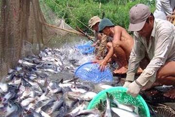 Thủy sản khai thác tăng, thủy sản nuôi trồng giảm